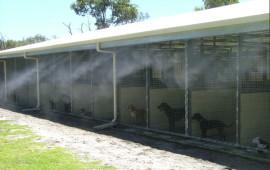 Hệ thống phun sương cho trại huấn luyện chó