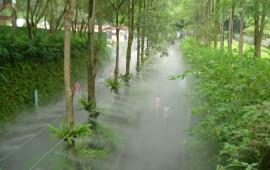 Hệ thống phun sương tưới cây
